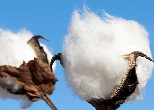 Intl. Cotton Market Report