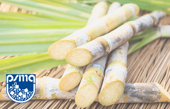 Pakistan Sugarcane Crop Estimages